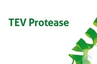 Protease TEV
