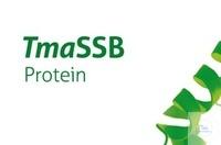 TmaSSB Protein